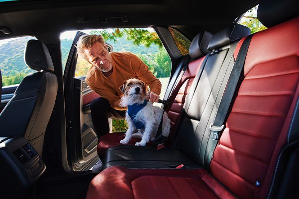 Over 3 feet of rear legroom. Always ensure your pet is properly secured and kept away from airbag development zones, including any side-curtain airbags. See Owner's Manual for details.